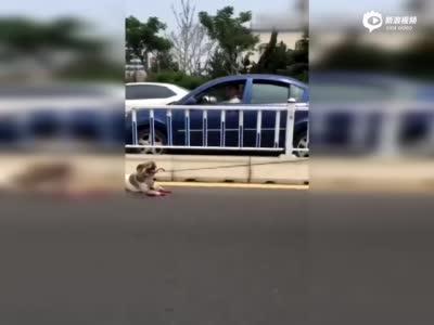 实拍男子开车将小狗拴拖行致死 现场血肉模糊
