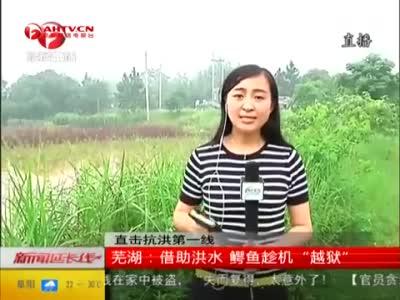 实拍安徽92条鳄鱼趁洪水越狱 农庄组织抓捕
