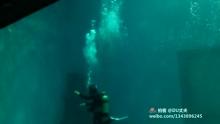 鲸彩至极!高潮在3'08秒,请睁大眼,自觉惊呼[吃惊](来自拍客手机客户端 下载地址:http://video.sina.com.cn/app/sinapaike.html)