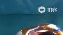 [云朵D67]第一次游泳,地点:杭州幽乐谷(来自拍客手机客户端 下载地址:http://video.sina.com.cn/app/sinapaike.html)