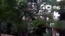 五一节上午(来自拍客手机客户端 下载地址:http://video.sina.com.cn/app/sinapaike.html)
