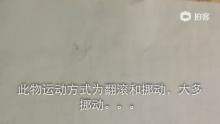 孝感高中高三18班发现未知物体。。。[奥特曼](来自拍客手机客户端 下载地址:http://video.sina.com.cn/app/sinapaike.html)